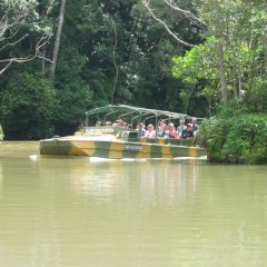 Ride an Amphibious Army Duck Through The Rainforest