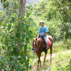 Riding Through The Forest - Cairns Horse Riding Tour