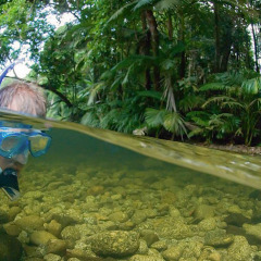 River Snorkelling In The Daintree Rainforest | Private Charter