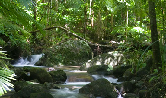 Rivers, Waterfalls, Rainforests, Wild Animals in the Daintree Rainforests of Australia