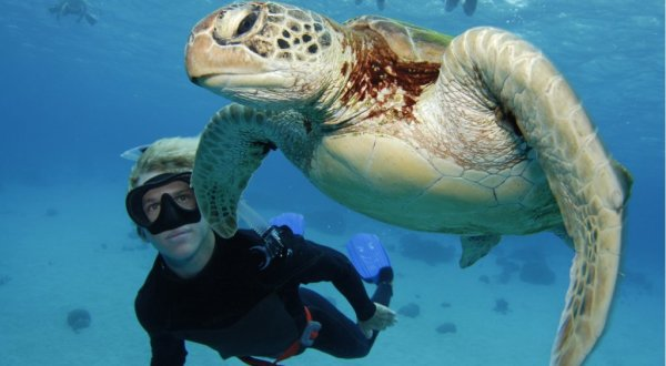 Say Hello to Friendly Turtles snorkeling on the Great Barrier Reef in Australia