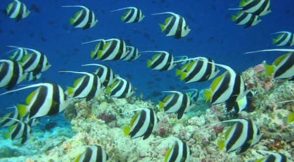 Schools Of Fish On Australia's Great Barrier Reef