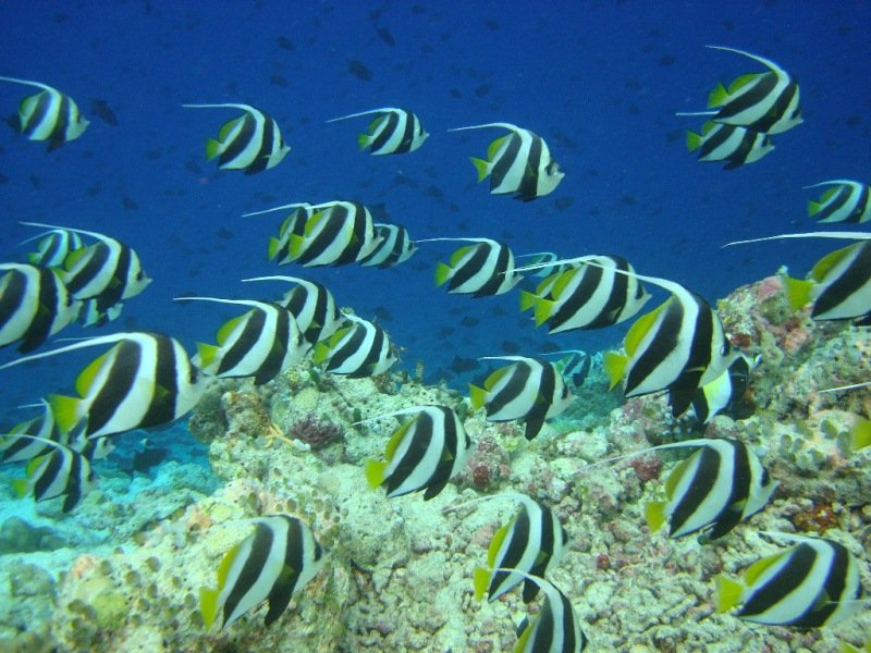 Plenty Of Fish Reviews >> Small Group Great Barrier Reef Tour | Very Popular | 2 Reef Sites 1 Day | Cairns