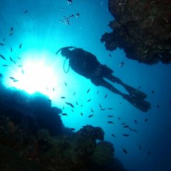 Scuba dive 2 locations on this reef tour from Cairns