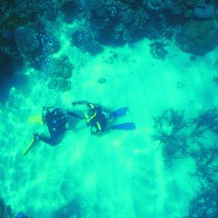 Scuba dive Great Barrier Reef