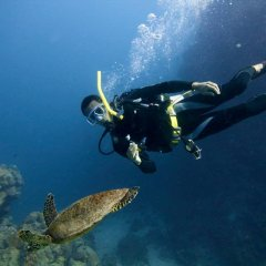 2 Day 1 Night Liveaboard | Diving with Sea Turtles | Departs From Cairns