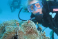 Scuba dive the Great Barrier Reef from Cairns