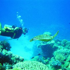 Scuba dive with turtles