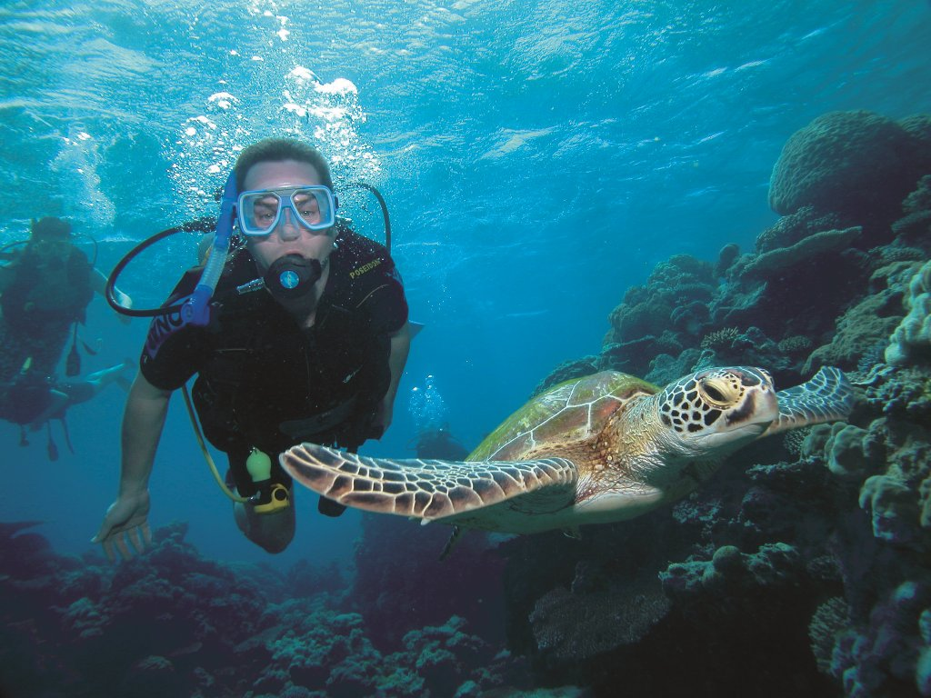 Port douglas snorkel diving trips great barrier reef cruises swim with whales - Dive in scuba ...