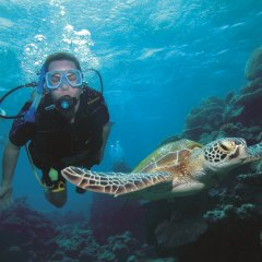 Scuba dive with turtles Agincourt Ribbon Reef Australia's Great Barrier Reef