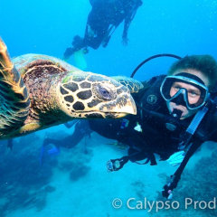 Scuba dive with turtles on Great Barrier Reef
