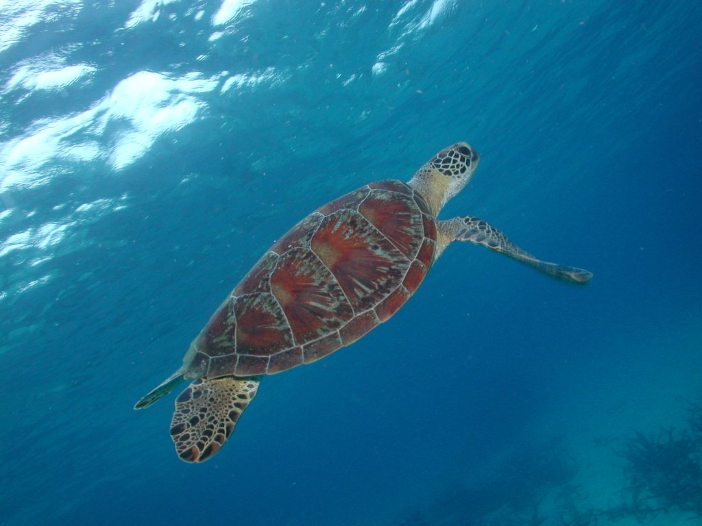 Great barrier reef diving cairns learn to scuba dive padi open water courses budget prices - Dive great barrier reef ...