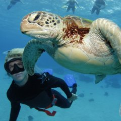 Snorkel On The Great Barrier Reef | Sea Turtles | Departs From Cairns North Queensland | Half Or Full Day Reef Trip
