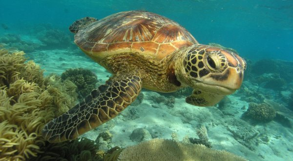 Sea Turtles | Reef Day Trip From Cairns | Only 130 Guests