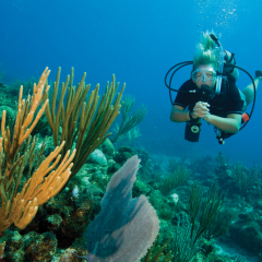 Scuba Diver Enjoying the Great Barrier Reef from Cairns