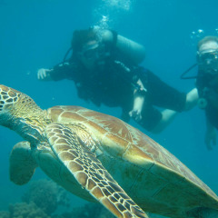 Scuba divers with a sea turtle on the Great Barrier Reef