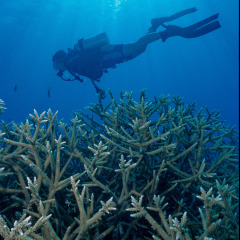 Scuba Diving Above Coral on our Cairns Reef Tour