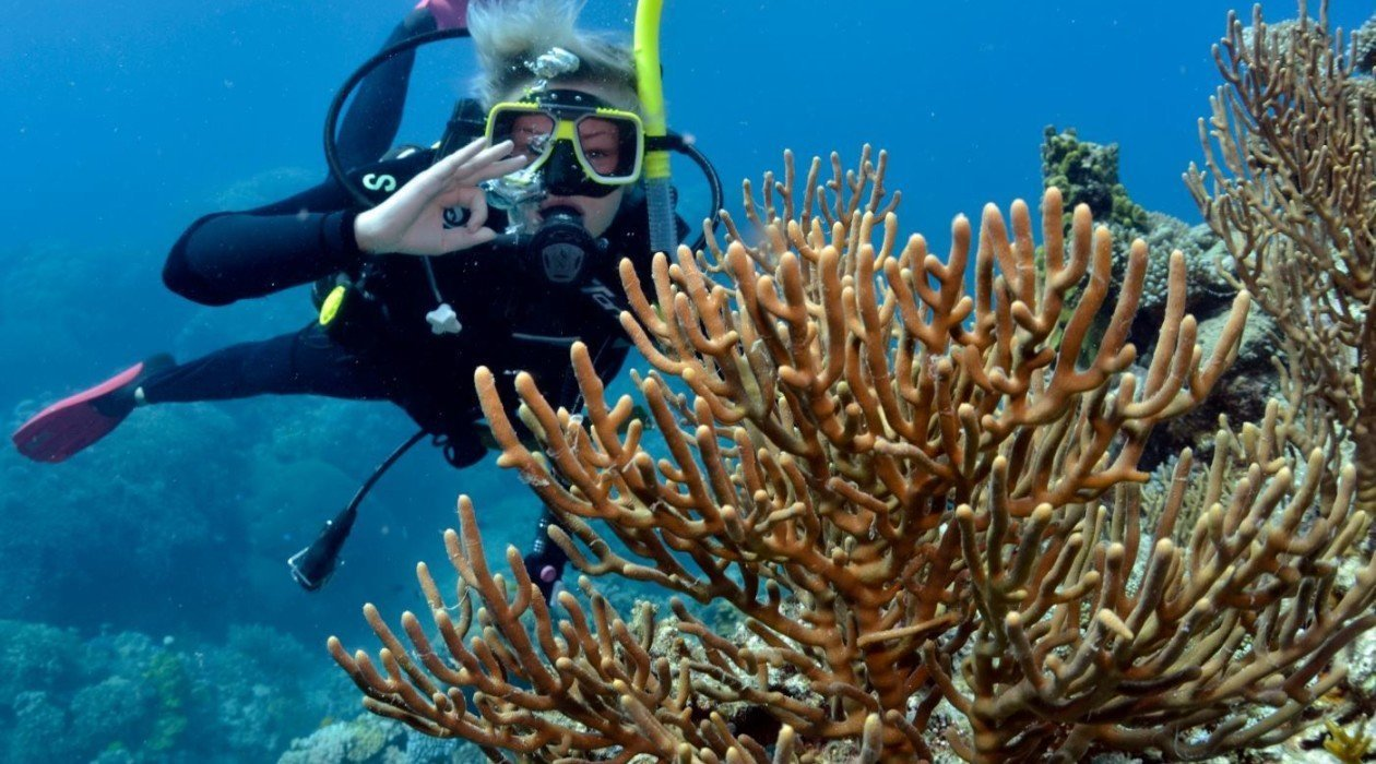 Great barrier reef diving cairns cheapest liveaboard scuba diving snorkel trip - Dive great barrier reef ...