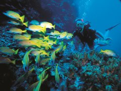 Scuba Diving at Agincourt Reef | Great Barrier Reef Port Douglas