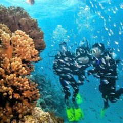 Scuba Diving At Arlington Reef | No Experience Necessary | Intro Dive