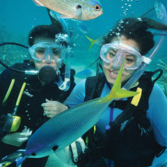 Scuba diving is for everyone on the Great Barrier Reef