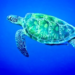 Sea Turtles Inhabit The Great Barrier Reef | Overnight Stay On The Great Barrier Reef