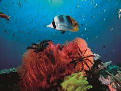 Sealife at Agincourt Reef | Great Barrier Reef Port Douglas