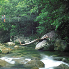 Mossman Gorge Land Of The Kuku Yalanji People Day Tour