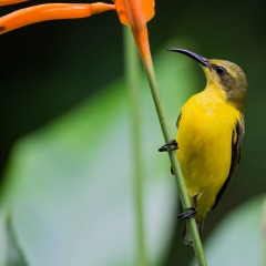 See a huge variety of birds in the Daintree Rainforest