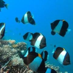 See all sorts of colourful marine life on the Great Barrier Reef in Australia