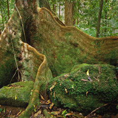 See ancient trees not found anywhere else on the planet
