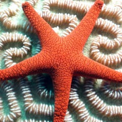 See beautiful brain corals and starfish on the Great Barrier Reef tour to Fitzroy Island