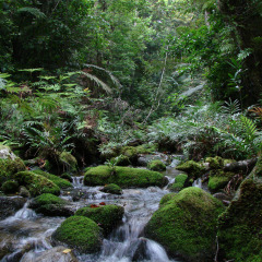 See beautiful rivers and gorges on this afternoon-evening wildlife spotting tour from Cairns