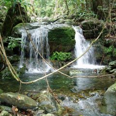 See beautiful rivers and wildlife in the Daintree & Cape Tribulation rainforests