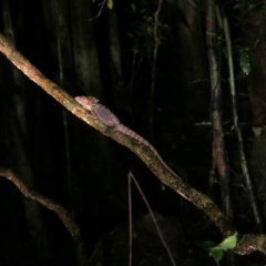 See lot's of rainforest animals as they forage for food under the cover of darkness