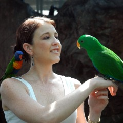 See native Australian animals at the Cairns Zoom and Wildlife Dome above the Casino