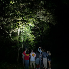 See rare native Australian animals at night on tour in Cairns