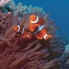 See the colourful varieties of fish on the Great Barrier Reef around Low Isles off Port Douglas