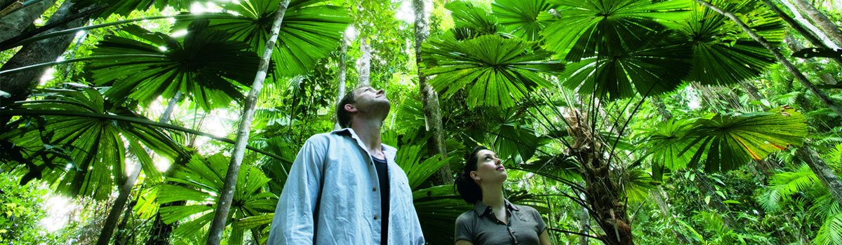 See the Daintree rainforests thru the eyes of the local custodian Aboriginals of Mossman Gorge