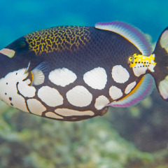See the many varieties of fish and marine life at the Cairns Aquarium