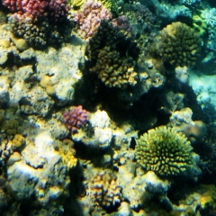 See the varieties of beautiful coral in the Cairns Aquarium
