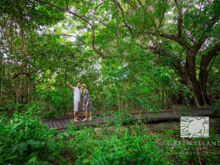 Self Guided Rainforest Walks