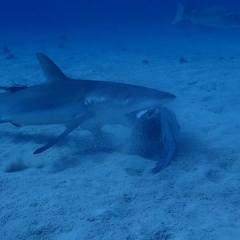 Private Charter Shark Dive Expedition On The Great Barrier Reef in Australia