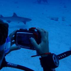 Shark Photo Opportunity Great Barrier Reef Liveaboard