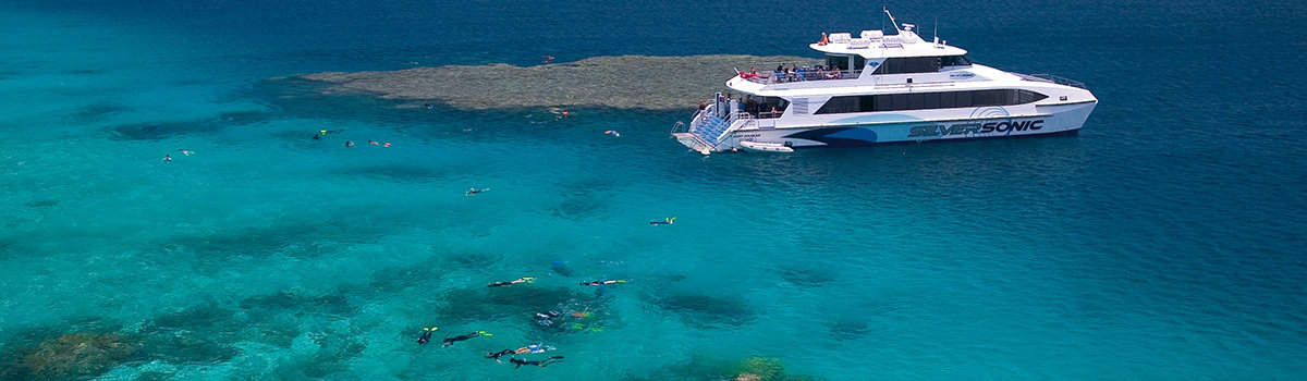 Great Barrier Reef Dive& Snorkelling & Cruise Swim with whales