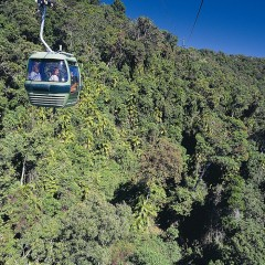 Low Price Kuranda Day Trip Skyrail Gondola