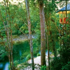 Smart Casual Lunch At Silky Oaks Treehouse Restaurant | 1 Day Daintree Rainforest Tour | From Cairns, Northen Beaches & Port Douglas