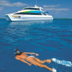 Snorkel and dive tours Cairns | Great Barrier Reef Tour