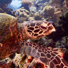 Overnight Great Barrier Reef Trip | Departs From Cairns | Sea Turtles