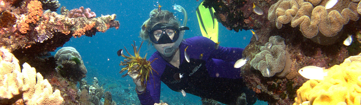 Snorkel & Dive Trips Great Barrier Reef Queensland Australia